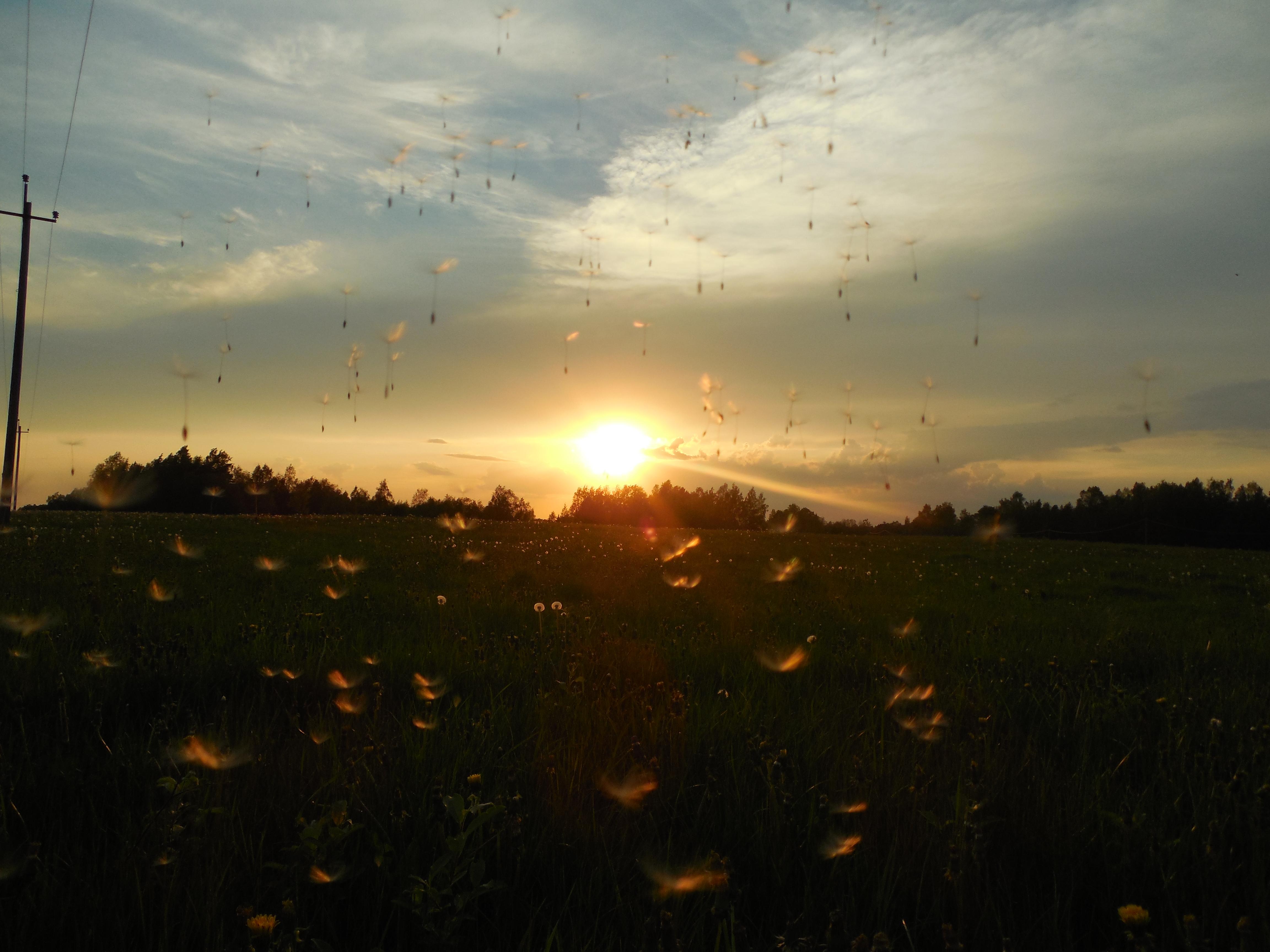 Õhtupäikese kuma