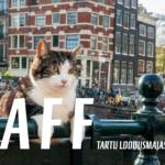 """MAFF filmiõhtu """"Kassi Amsterdam"""" ja """"Nüüd või ei kunagi"""" 28.01.2020"""