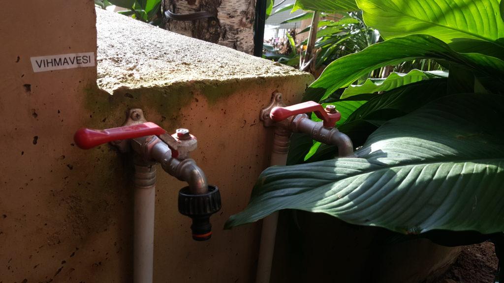 Tartu loodusmaja taimede kastmisel kasutatakse vihmavett