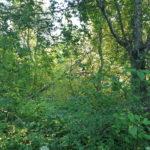 Mets ja kestliku arengu haridus
