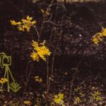"""Fotograaf Toomas Kalve näituse """"Koloreeritud loodus"""" avamine 16.10.2020"""