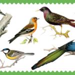Koolivaheajaks vaheldust kogu perele – linnud, puud ja pungad
